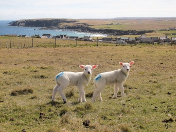 Near Port of Ness, Isle of Lewis, Scotland, 11 May 2013.