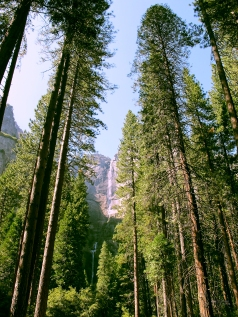 5 July 2012, Yosemite National Park, California, USA.